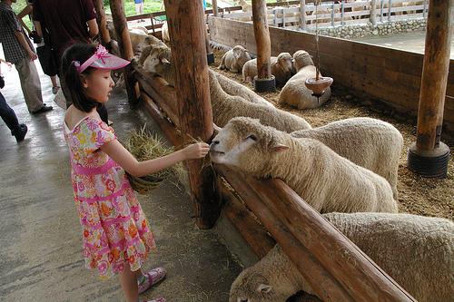 Daegwallyong Sheep Farm