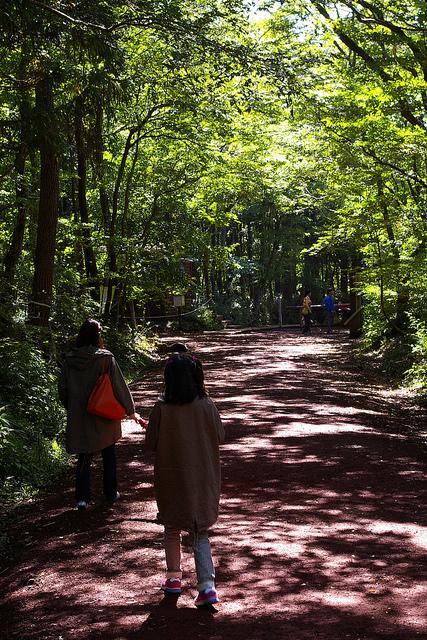 Jeju Trip (사려니숲길)
