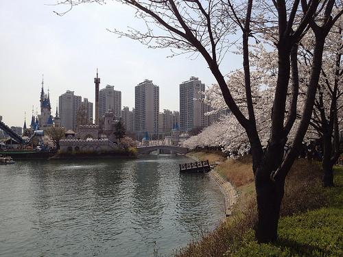 석촌 호수 벚꽃 축제