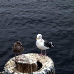 [SV출장#2-7] 몬트레이: Fisherman's Wharf
